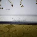 Кресло в стиле Луи XV
